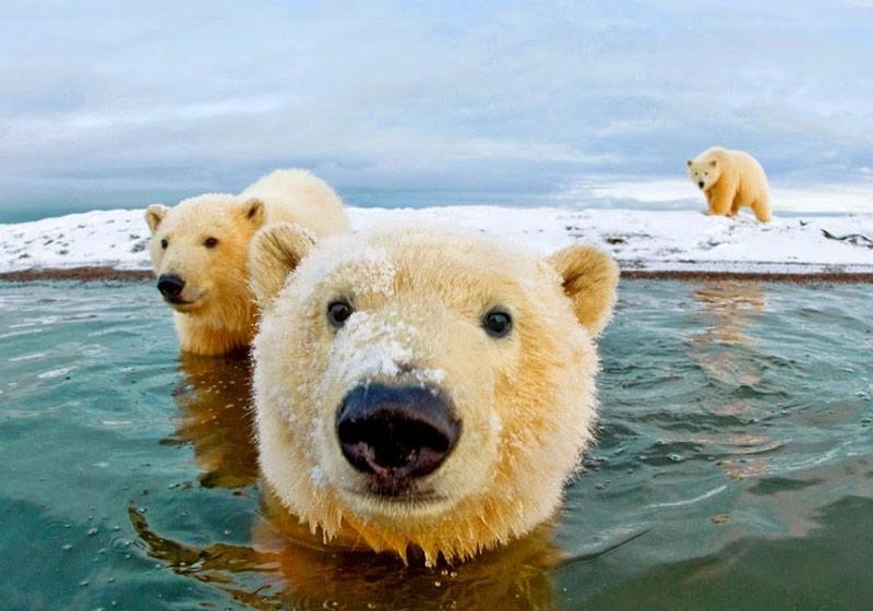 عجیب و خواندنی در مورد خرس ها، عطسه و کروکودیل