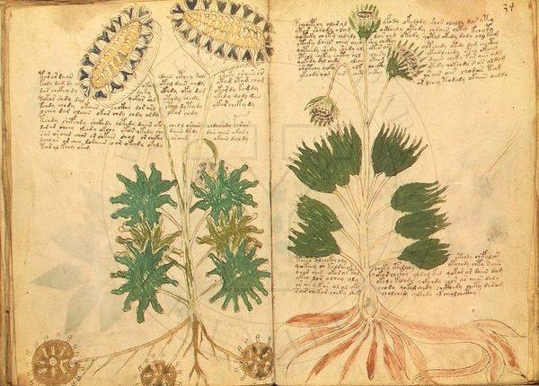 دست نوشته های ووینیچ Voynich Manuscript دنیایی از رمز و راز همچنان پنهان